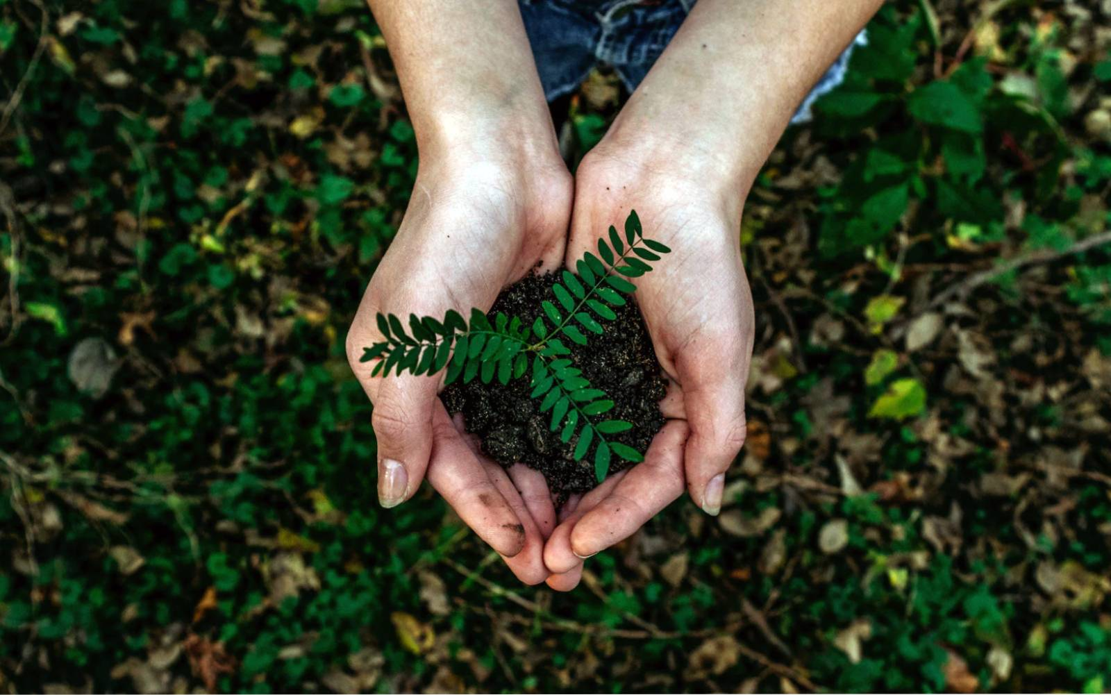 5 tips for a greener office